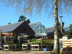 Rumwood Nurseries, near Maidstone, Kent